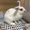 トライアル決定 ルナちゃん:元気なミニウサギさん♀ サムネイル2