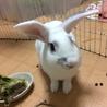 トライアル決定 ルナちゃん:元気なミニウサギさん♀ サムネイル5