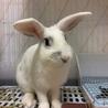 トライアル決定 ルナちゃん:元気なミニウサギさん♀ サムネイル6