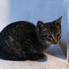 人なつっこいキジトラ2ヶ月弱の子猫