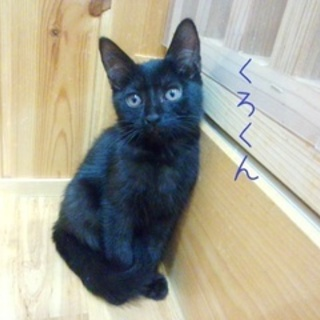 【募集一時停止】☆子猫3匹 可愛い黒猫&サビ猫です