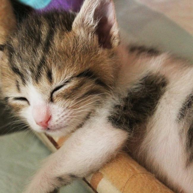 猫天使の会のカバー写真