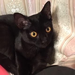 猫らしい猫です。