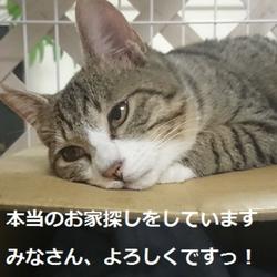 千葉行徳保護猫の里親会 サムネイル1