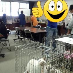 神奈川県動物保護センター登録ボランティア譲渡会(管轄地域外譲渡可能です。)