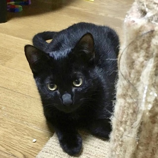 面倒見のよい頼れる黒猫兄さん☆彡.。デパル君4ヶ月