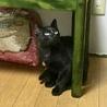 面倒見のよい頼れる黒猫兄さん☆彡.。デパル君4ヶ月 サムネイル3