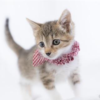 フワフワ小顔のアメリちゃん…1ヶ月半