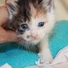 動画あり かわいい三毛猫なんちゃん 離乳中 サムネイル4