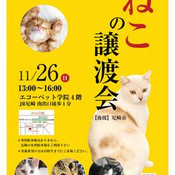 Save Cats 第9回 猫の譲渡会