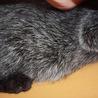 動画あり ごま塩黒猫どろんぱくん サムネイル2