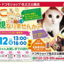 猫の譲渡会in大阪・住之江公園ドコモショップ駐車場