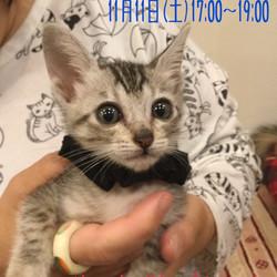 17~19時三宮駅前【猫の譲渡会 in くーにゃん】