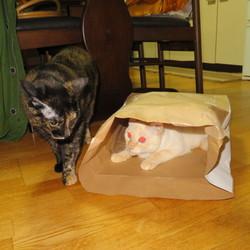 袋入り「猫」一匹!