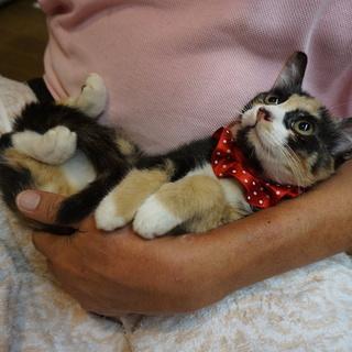 三毛猫ふみづき、一緒に寝られます!