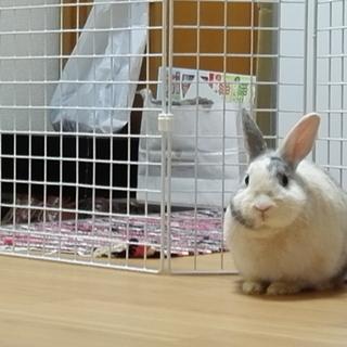 のんびりマイペースウサギさんです!