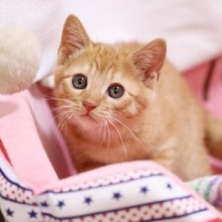 可愛い茶トラの子猫・3ヶ月