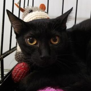 行き場をなくした黒の子猫①