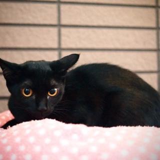 黒猫ネーロ