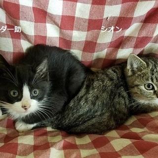 ポテッと体系 ダー助・シオン
