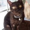 姫路市譲渡候補猫のご紹介 サムネイル4
