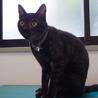 姫路市譲渡候補猫のご紹介 サムネイル5