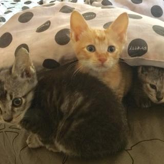 2ヶ月の兄弟❤︎子猫