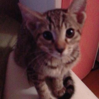 ひとりぼっちの4ヶ月の子猫❤️
