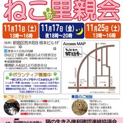 11月11日(土) 地域猫から社会猫へ FIPフリー 四谷猫廼舎 里親会(ボランティア募集中)