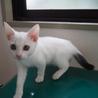 姫路市譲渡候補猫のご紹介 サムネイル2