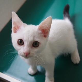 姫路市譲渡候補猫のご紹介