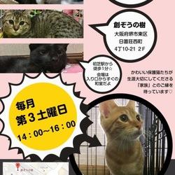 猫の譲渡会☆大阪・堺市初芝、ねこのおうちさがし