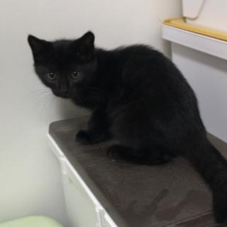 可愛らしい黒猫ちゃんの女の子です。