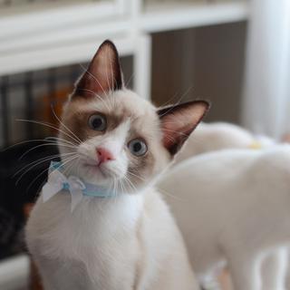 ブルーの瞳がキレイな甘えん坊さんです♪