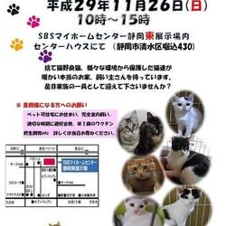 静岡市で譲渡会開催です