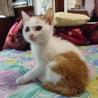 甘えんぼな子猫ちゃん 女の子 2ヶ月足らず位