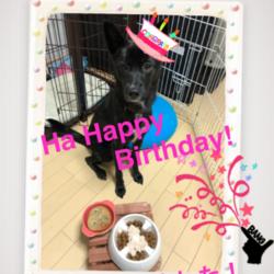 お誕生日、おめでとう!