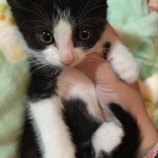 白黒の可愛い子猫!!