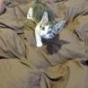 生後3ヶ月未満の子猫ちゃん