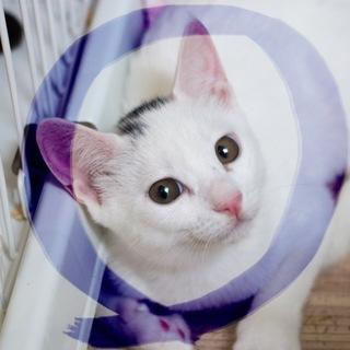 6ヶ月丸顔丸い目★超イケメン白猫ポチ♂