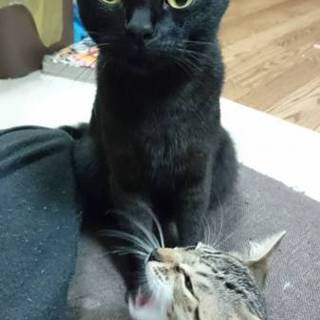 「至急」母猫里親募集中