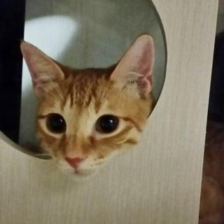 ★先住猫大好きな元気・活発★甘えん坊男の子★