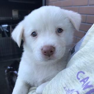 中型雑種の仔犬 パトリちゃん 10月3日生まれ