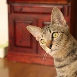 11/23(木 祝日)かわいい猫譲渡会