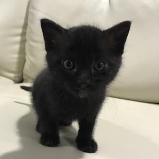 可愛い黒猫の男の子です