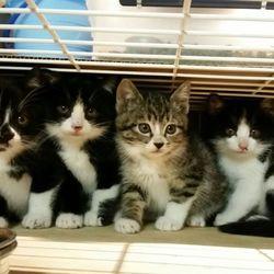 11月17日(金) 地域猫から社会猫へ 四谷猫廼舎 ナイター 里親会(ボランティア募集中) サムネイル2