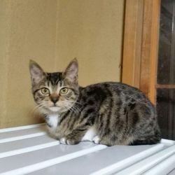 11月17日(金) 地域猫から社会猫へ 四谷猫廼舎 ナイター 里親会(ボランティア募集中) サムネイル3
