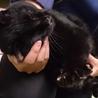 【命が繋がりました❗】超甘えん坊の黒猫 サムネイル4