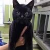 【命が繋がりました❗】超甘えん坊の黒猫 サムネイル2
