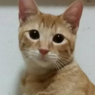 5ヶ月去勢済★人間も猫も大好きな元気な男の子